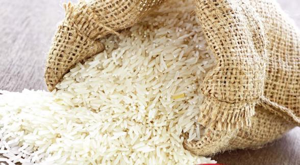 تولیدکنندگان برنج هاشمی ممتاز