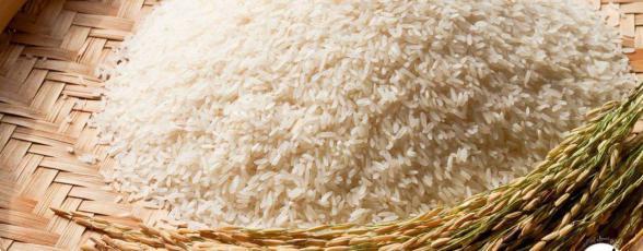 به چه برنجی لاشه گفته می شود؟